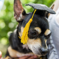 Dog in tiny mortarboard