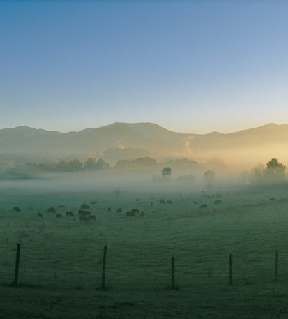Mist over the Swannanoa Valley