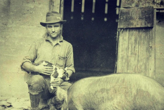 Archival photo of a pig on the farm