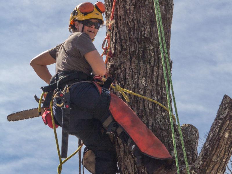 Student on tree crew in tree