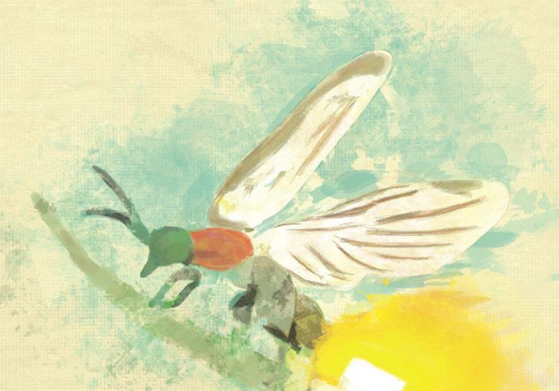 Spirits Rising Firefly